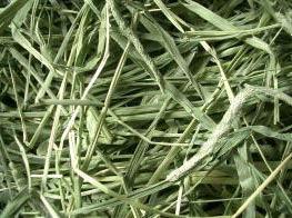 牧草価格の改定と交換、当店で販売中の牧草はコレだ!